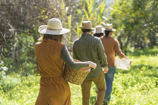 Rear view of group of friends walking with basket in the countryside