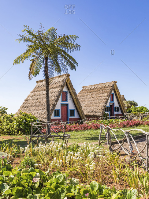 Portugal- Madeira- Santana- Springtime garden and palm tree in front of traditional triangle shaped town houses