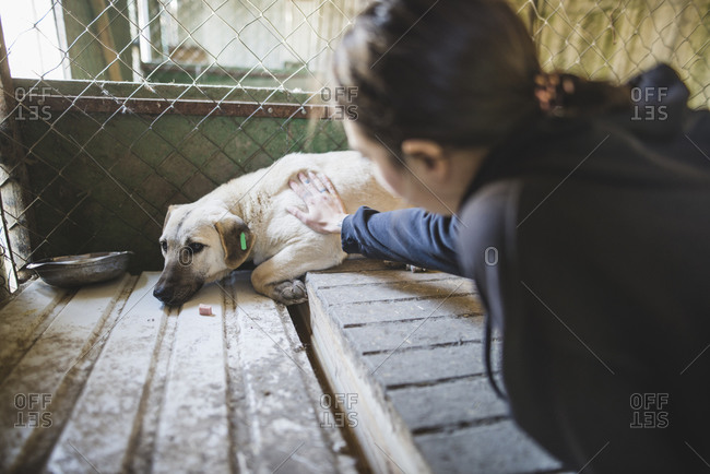 Young woman petting sad dog in the animal shelter