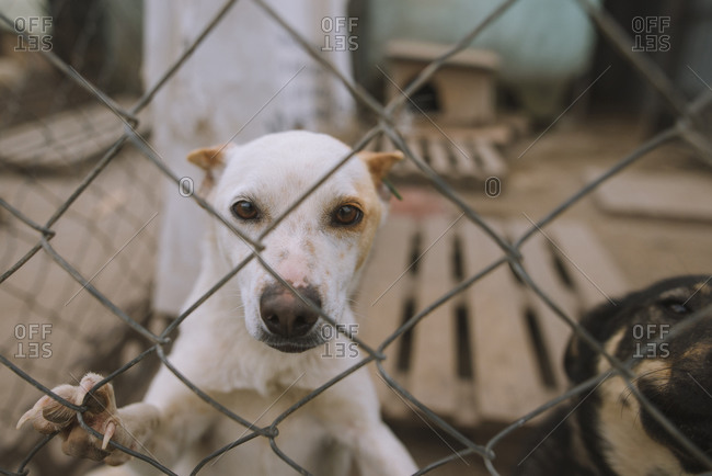 Portrait of dog behind fence in animal shelter