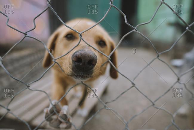 Portrait of sad dog behind fence in animal shelter