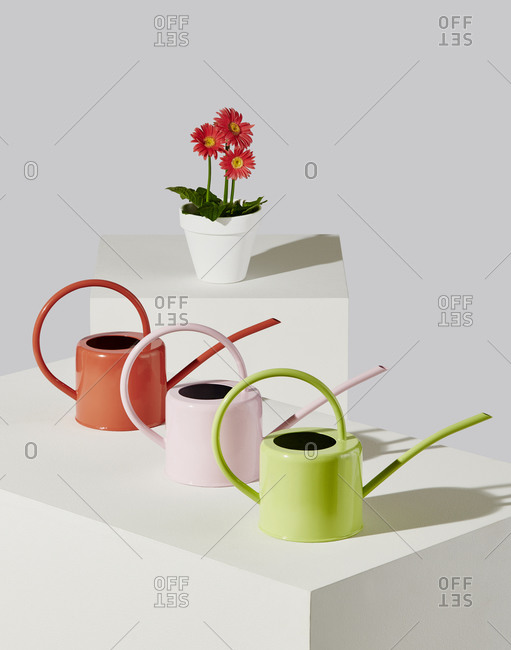 Colorful Watering Cans on White Pedestals