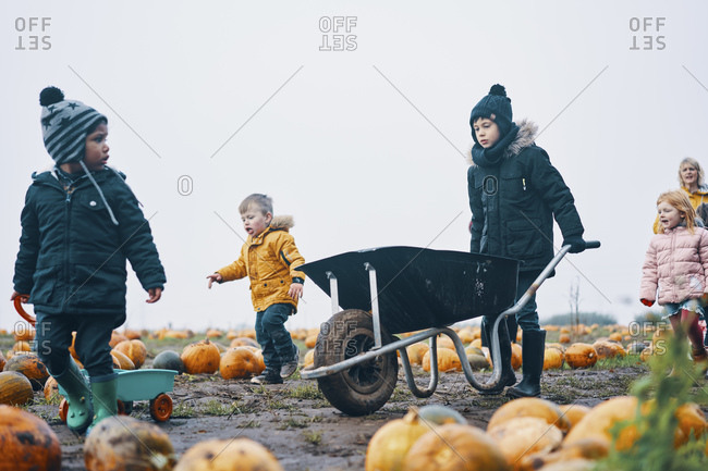 Children and one woman walking through a field of pumpkins pushing a wheelbarrow and pulling a trailer.