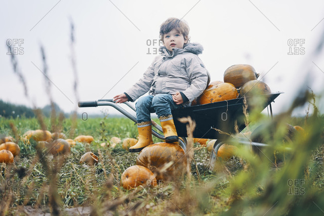 A young child sitting on a wheelbarrow of pumpkins in a field of pumpkins.