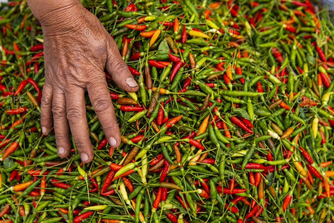 Hot peppers for sale at a market in Luang Prabang, Laos