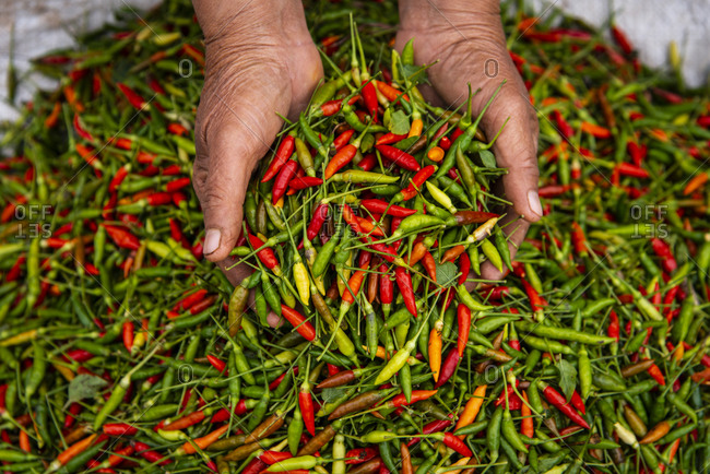 Hands holding hot peppers for sale at a market in Luang Prabang, Laos