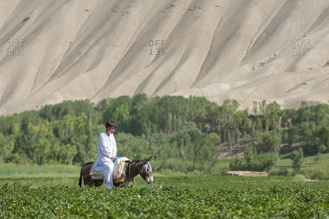 A young man rides a donkey through potato fields in Bamiyan, Afghanistan