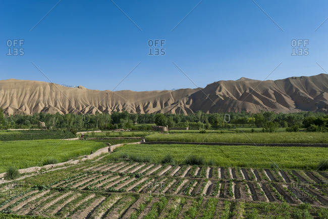 Fields of freshly planted potatoes and wheat