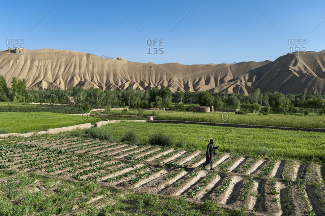 A farmer walks through fields of freshly planted potatoes and wheat