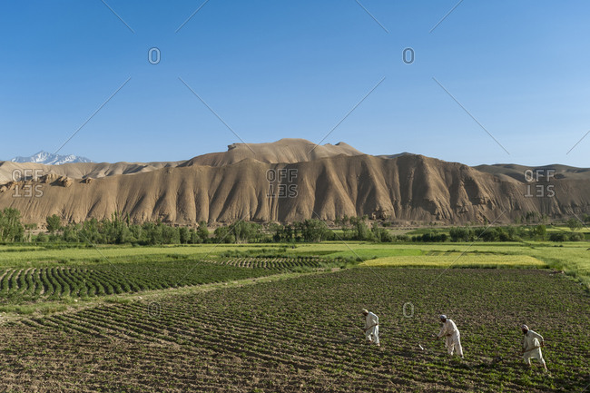 Farmers wearing traditional dress working fields in Bamiyan valley
