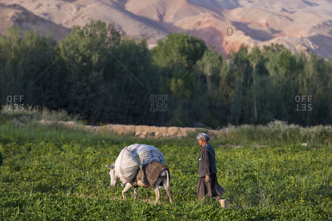 A man carries fodder through fields on a donkey