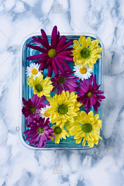 Daisy flowers of different colors floating in water in a glass container