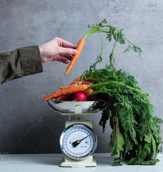 Female hand hold carrot over scales with other carrots, radish and beets on grey background