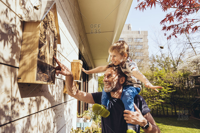 Father and son inspecting their insect hotel with bees