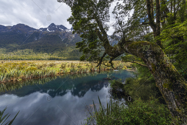 New Zealand- Southland- Te Anau- Scenic view Earl Mountains and shore of Mirror Lakes