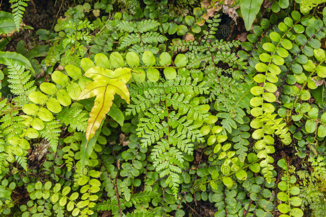 New Zealand- Close-up of green vegetation in temperate rainforest