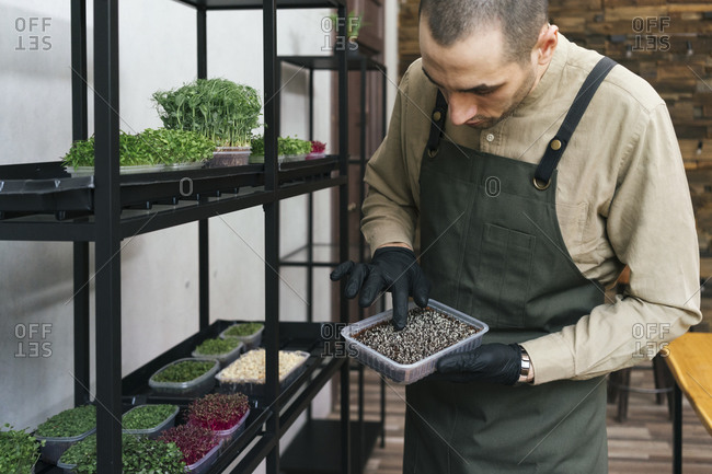 Man working on soil for microgreens