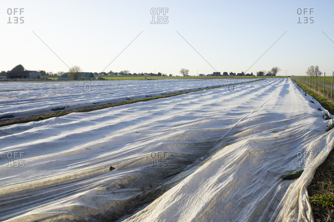 Germany- North Rhine-Westphalia- Ruhr- Strawberry field covered in foil tunnels protecting against cold