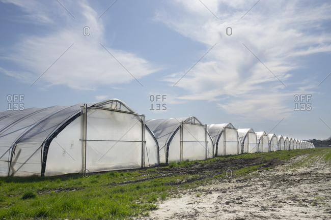 Germany- North Rhine-Westphalia- Ruhr- Row of foil greenhouses protecting fruit plantation