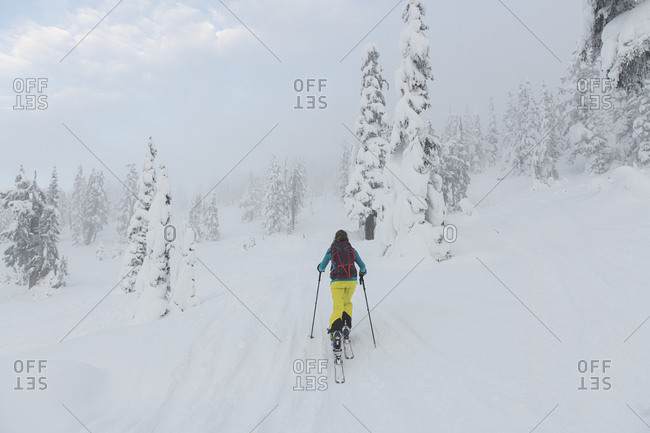 Woman skinning her way up in backcountry Red Heather, Squamish