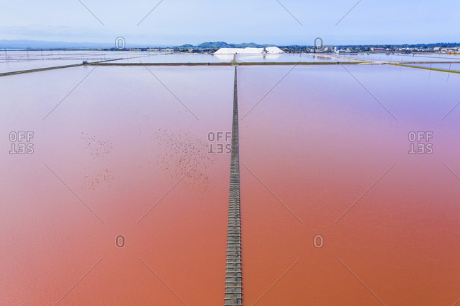 Bright Pink Salt Evaporation Pond and Flock of Starlings in SF Bay