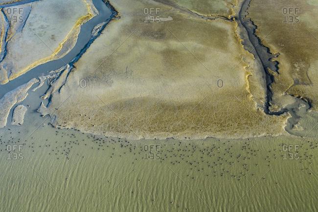 Birds Dot a Sunlit Marsh in San Francisco Bay Aerial