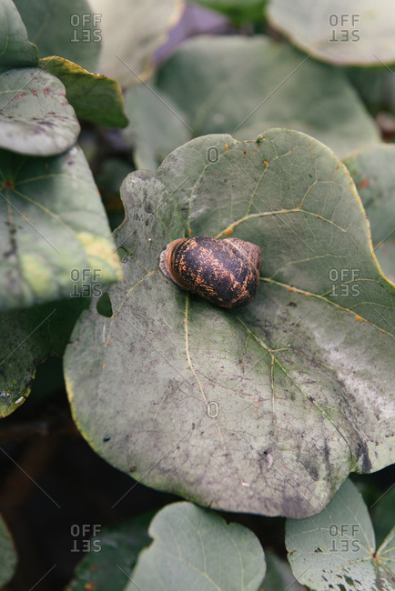 Snail crawling along a leaf in the south of France