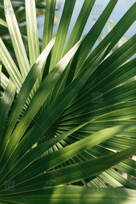 Palm fronds in dappled sun near a cenote in Yucatan Mexico