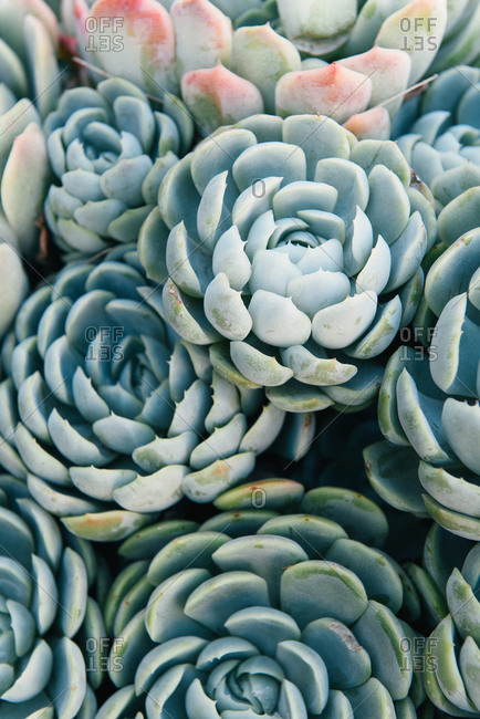 A pot of succulents grouped together