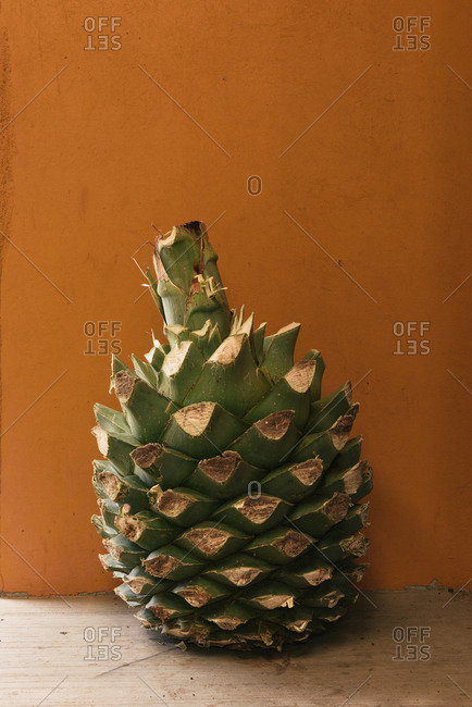An agave pine rests along a mezcal distillery wall in Mexico