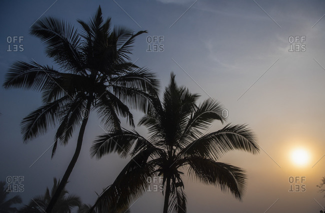 Palm tree's in the Sri Lankan highlands at dawn
