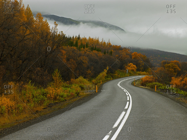 Winding road at Hallormsstadhur forest in east Iceland