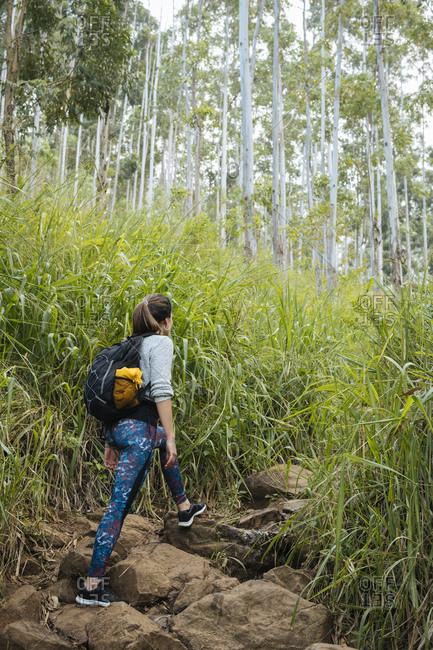 Hiker exploring forest, Ella, Uva, Sri Lanka