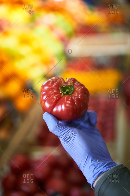 Hand wearing blue rubber glove holding a tomato in a grocery store