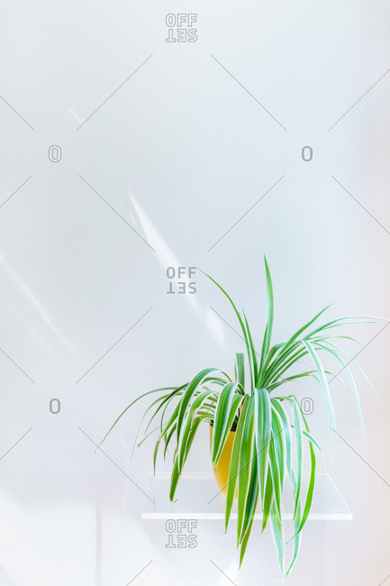 Conceptual interior design and minimal florist concept. Vertical composition with white copy space.