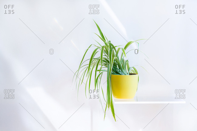 Conceptual interior design and minimal florist concept. Horizontal composition with white copy space.