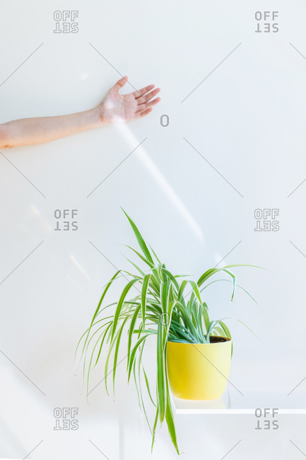 Conceptual beam of light touching an unrecognizable woman hand. Interior design and minimal florist concept.