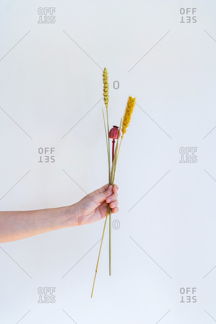 Conceptual interior design and minimal florist concept. Composition with white copy space. Wedding decoration concept.