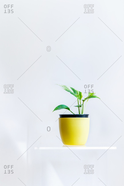 Conceptual interior design and minimal florist concept. Composition with white copy space. Artistic still life indoors.