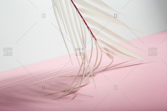 From below white tropical palm tree leaf arranged over pink and white background representing summer holidays on sunny beach