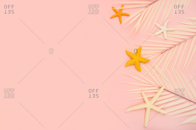Top view composition of colorful starfish and white tropical leaves arranged on pink background