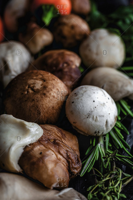 Wild mushrooms assortment with onions, chili peppers, thyme, rosemary and basil on dark background. Vegan food concept. Macro