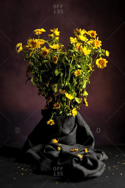 Bouquet of fresh spring yellow daisy flowers on dark background in studio
