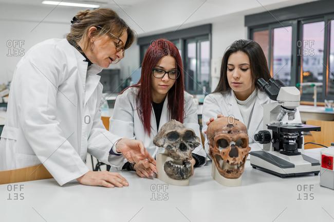 Scientists examining skull in lab
