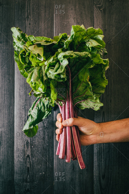 Unrecognizable person holding and showing a bunch of healthy fresh beetroot leaf against black lumber wall