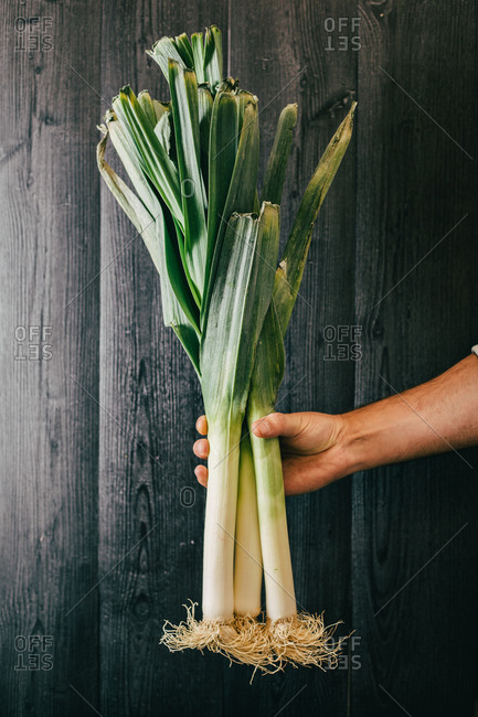 Unrecognizable person holding and showing a bunch of healthy fresh leek against black lumber wall