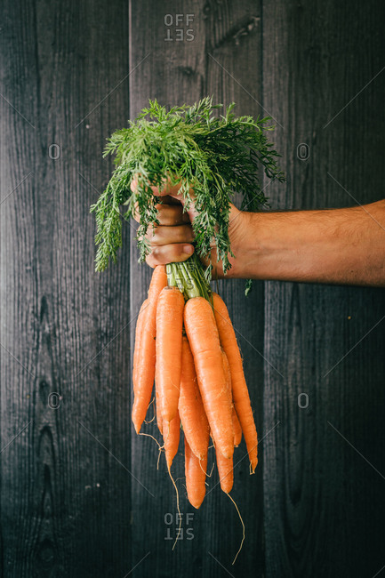 Unrecognizable person holding leaves and showing a bunch of healthy carrots against black lumber wall