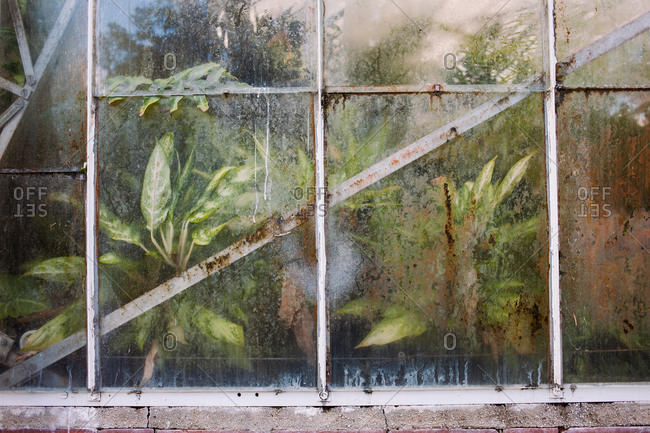 View into a foggy greenhouse filled with plants