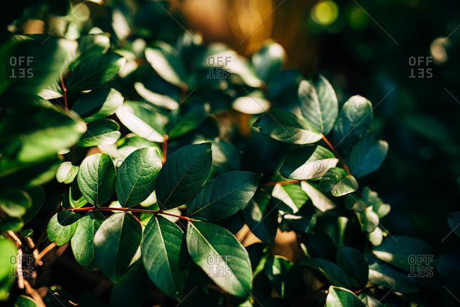 Close up of a green leafy bush