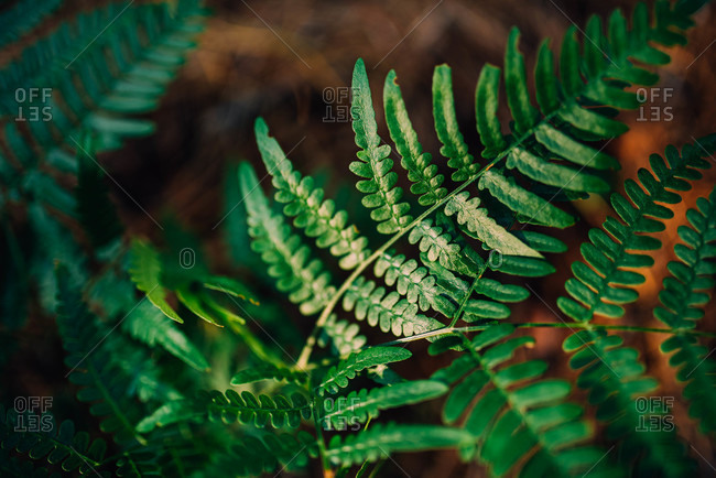 Close up of a green fern plant